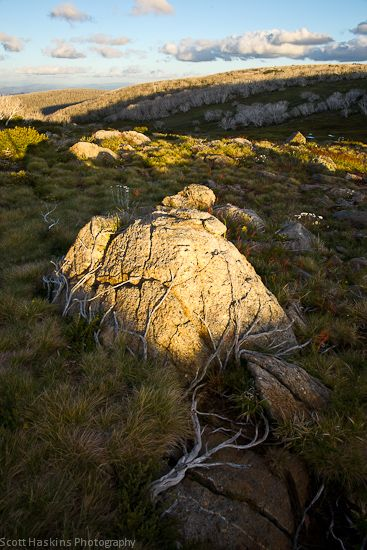 Bogong High Plains, Alpine National Park, Victoria