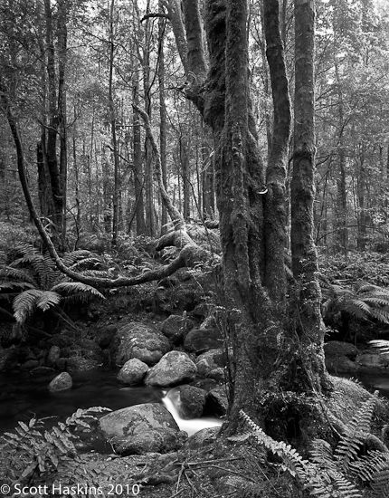The Beeches, Yarra Ranges National Park, Victoria