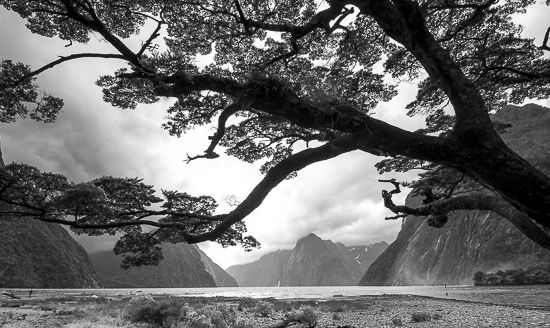 New Zealand Black And White Landscape Photography